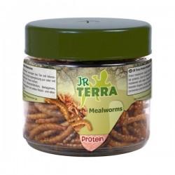 JR Terra Proteiny - Mącznik młynarek 20 g