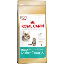 Kitten Maine Coon 36 400 g Royal Canin